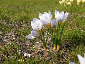 wiosenne kwiaty (1).jpeg