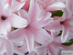 wiosenne kwiaty (5).jpeg