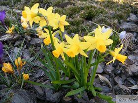 wiosenne kwiaty (7).jpeg