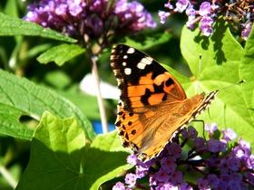 Motyle Zagwiździa (2).jpeg