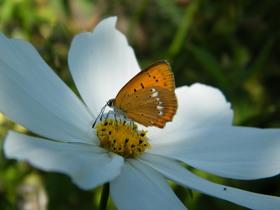 Motyle Zagwiździa (3).jpeg