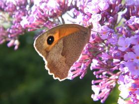 Motyle Zagwiździa (4).jpeg