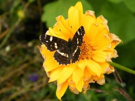 Motyle Zagwiździa (6).jpeg