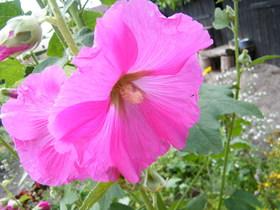 Kwiaty Zagwiździa.jpeg
