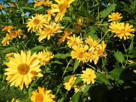 Kwiaty Zagwiździa (11).jpeg