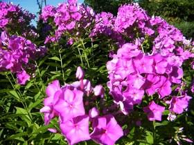 Kwiaty Zagwiździa (12).jpeg