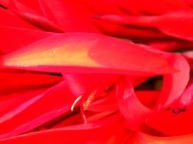 Kwiaty Zagwiździa (23).jpeg