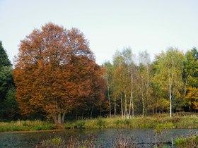 Widoki jesieni w Zagwiździu (19).jpeg