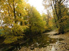 Widoki jesieni w Zagwiździu (25).jpeg