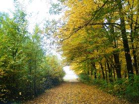 Widoki jesieni w Zagwiździu (33).jpeg