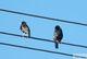 Galeria Ptaki