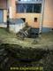 Zagwiździe w Nadrenii - Palatynacie 10.2013r.  (4) (Kopiowanie).jpeg